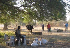 """Zahájení projektu """"Zajištění udržitelné a stabilní produkce krmiva pro dojný skot drobných farmářů"""""""