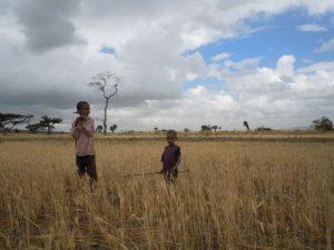 Česká republika poskytne pomoc Etiopii v souvislosti se závažnými dopady sucha