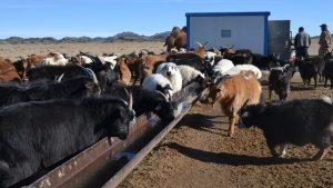 Mongolští pastevci umí nyní lépe přečkat drsnou zimu, pomáhají jim s tím Češi